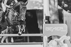 FELIXMÜLLER Frida (GER), Diave<br /> Paderborn - OWL Challenge 5. Etappe BEMER Riders Tour 2019<br /> SPOOKS-Amateur Trophy - Large Tour <br /> Zwei-Phasen Springprüfung, international <br /> Finale Heinzelmännchen Young Riders Amateur Cup 2019<br /> 14. September 2019<br /> © www.sportfotos-lafrentz.de/Stefan Lafrentz