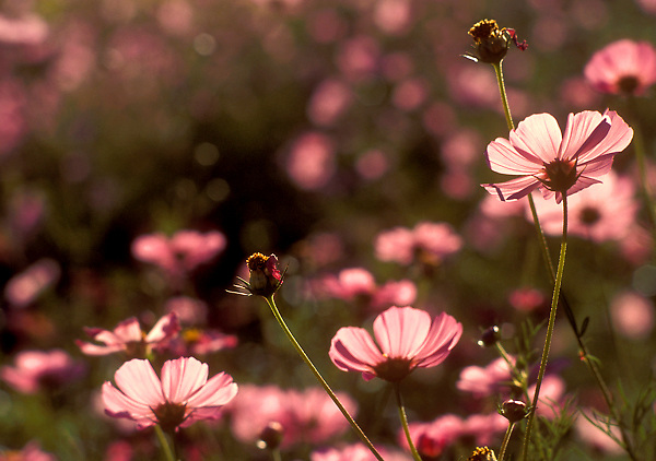 Stock photo of Flowers