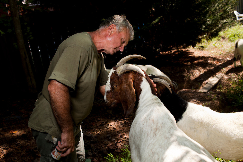Farmer Jeff Mullins looks over a goat in Chapel Hill, N.C., Thurs., July 22, 2010. Mullins has raised every Boer goat in his herd from the moment they were born and lets his wife name each one of them...D.L. Anderson for The Wall Street Journal..GOATS