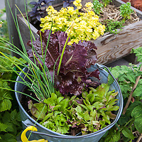 A variety of herbs and vegetables in a container gardne on an urban rooftop.