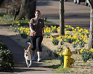 daffodills-erin innman
