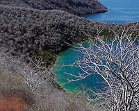 Tagus Cove en Isla Isabela