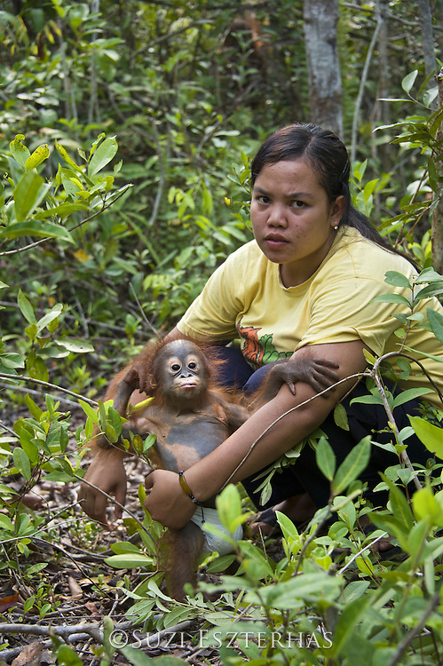 Bornean Orangutan<br /> Pongo pygmaeus<br /> Caretaker with infant during forest exploration and training program <br /> Orangutan Care Center, Borneo, Indonesia<br /> *No model release available - for editorial use only