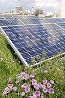 24 MAY 2005, BERLIN/GERMANY:<br /> Solaranlage auf dem Dach des Willy-Brandt-Hauses<br /> IMAGE: 20050524-01-016<br /> KEYWORDS: Photovoltaik, Sonnenenergie, Solarenergie, Umwelt, environment, Energie, Strom, Blumen, flowers, wiese, Dachbegruenung, Dachbegrünung