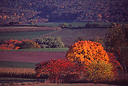 Farm and fall foliage, bright orange, NC Pennsylvania