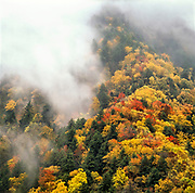 The higher elevations of the smokmy mountains are often enveloped in mist and fog, leading to both its colloquial name and dramatic autumn scenes. Great Smoky Mountains National Park, Tennessee, USA.