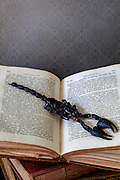 a scorpion on an old book