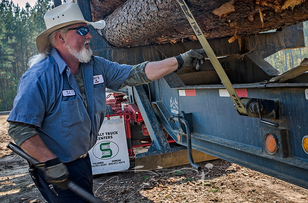 T.J. Branham, of Tracy's Logging, checks the straps on a load of loblolly pine, Nov. 16, 2016, in Steadham, S.C. The timber will go to a Georgia-Pacific plant.  (Photo by Carmen K. Sisson)