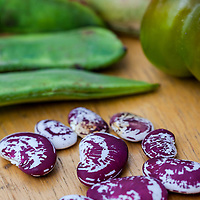 Heirloom 'Christmas'  Lima beans with white with purple splashes and swirls. This variety is also known as 'Chestnut' lima bean.