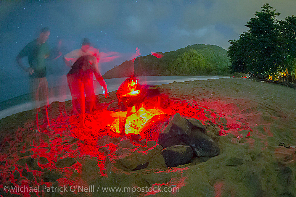 A guide from the Grande Riviere Nature Tour Guide Association writes down data on a nesting Leatherback Sea Turtle, Dermochelys coriacea, in Trinidad while tourists look on.