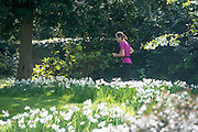 © Licensed to London News Pictures. 13/04/2014. London, UK. A woman jogs through the grounds. People enjoy the morning sunshine at Chiswick House in West London today 13th April 2014. Photo credit : Stephen Simpson/LNP