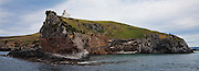 Lighthouse at Taiaroa Head, Otago Peninsula, Dunedin, New Zealand (12x33 inch print)<br /> <br /> The Northern Royal Albatross Colony at Taiaroa Head on the tip of the Peninsula, is the only mainland breeding colony of albatross in the world.
