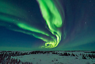 Curtains of aurora during an active storm on February 18, 2018 from the Churchill Northern Studies Centre, in the early evening in the last of the twilight. This night the aurora was brightest early in the evening. The Big Dipper is at left. <br /> <br /> This is a single frame from a 725-frame time-lapse with the Nikon D750 at ISO 3200 and Sigma 14mm Art lens at f/1.8. Exposures were 2 seconds.