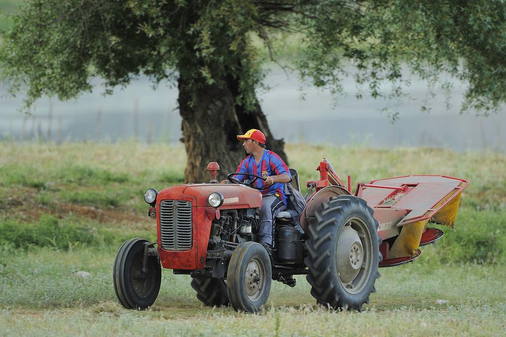 Farmer son. Lake Prespa National Park, Albania June 2009