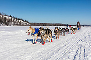 Musher Peter Reuter competing in the 45rd Iditarod Trail Sled Dog Race on the Chena River after leaving the restart in Fairbanks in Interior Alaska.  Afternoon. Winter.