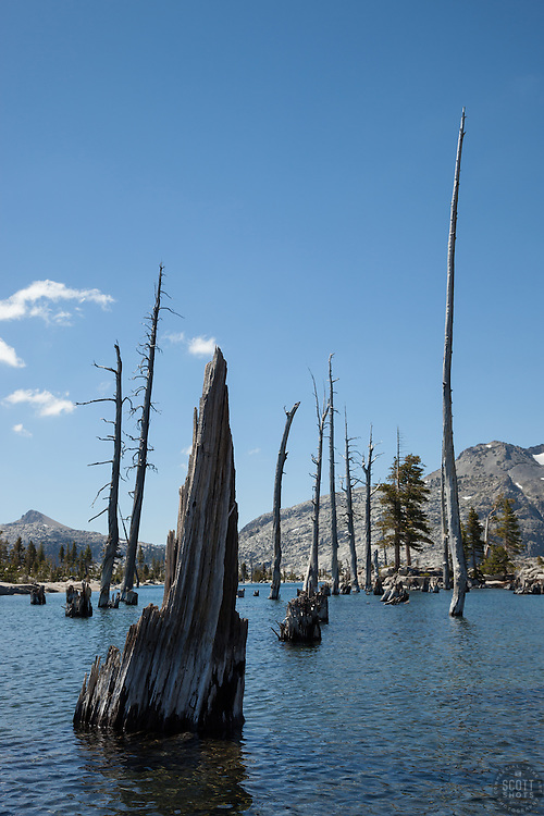 """""""Lake Aloha 6"""" - Photograph of dead trees and stumps in the water at Lake Aloha in the Tahoe Desolation Wilderness."""