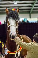 Shire Horse Show 2017