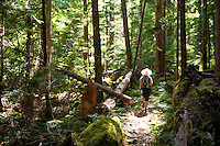 The hiking trail to Upper Myra Falls in Strathcona Park is forested and wild, and perfect for an afternoon hike.