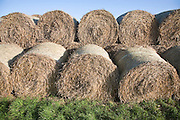 Stacked round straw bales and blue sky and green grass, Suffolk, England