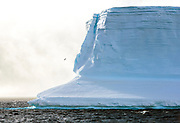 Giant iceberg and a single petrel in the Antarctic Sound close to Brown Bluff, Antarctic Peninsula
