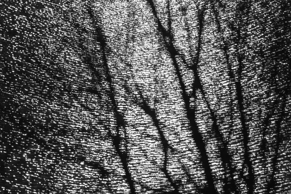 Reflections of the sun and tree silhouettes in a pond // Weerspiegelingen van de zon in vijver met gerimpeld water door de wind, met silhouet van boom.
