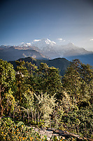 Stunning early morning views across to Annapurna South & Hiunchuli from Ghandruk, Nepal.