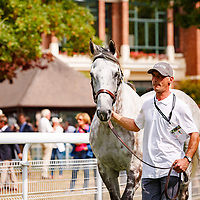 Solow - Au Dela Des Pistes Champions Parade in Deauville, France 26/08/2017 photo: Zuzanna Lupa