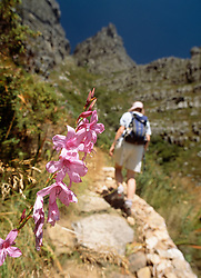 Woman walking up the Platteklip Gorge to the top of Table Mountain (Credit Image: © Axiom/ZUMApress.com)
