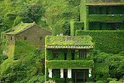 CHINA OUT<br /> The eerie beauty of China's seaside ghost town: Stunning images show how an abandoned fishing village became a green wonderland swallowed up by mother nature<br /> <br /> Vines climb the old stone walls, weave through the windows and doors and creep along the crumpling paths in an abandoned Chinese fishing village which has been reclaimed by mother nature.<br /> Time stands still in this village on Gouqi Island - one of almost 400 that make up the Shengsi Islands to the east of China's Zhejiang province.<br /> What was once a thriving fishing hub has been long deserted and naturally transformed into a green jungle of tangled plants and neglected buildings. <br /> <br /> The island, a few hours east of Hangzhou Bay, is a stark contrast to the vibrant metropolitan skyline of Shanghai - an image conjured up in many westerners' minds when imagining populous China.<br /> Some of the islands at the mouth of the Yangtze river are popular tourist destinations and have been described as a paradise for seafood lover, while others are inhabitable.<br /> The stunning scenery on Gouqi Island is the result of the houses and outbuildings being slowly consumed by nature.<br /> The seaside village now lies empty because it was more economical for the fishermen to move and work on the mainland where catch could easily be transported and sold.  <br /> ©Exclusivepix Media