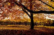 Landscape - tree in Autumn