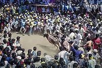 Alanganallur, Tamil Nadu, India: Jallikattu festival