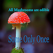 Famous humourous quotes series: All mushrooms are edible. Some only once