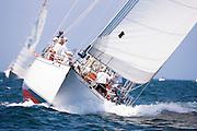 Lone Fox sailing in the Opera House Cup Regatta.