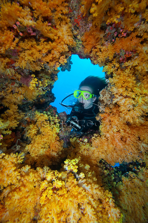 Diver looking out of hole of circular formation of Dendronephthya Soft Corals, Meemu Atoll, The Maldives
