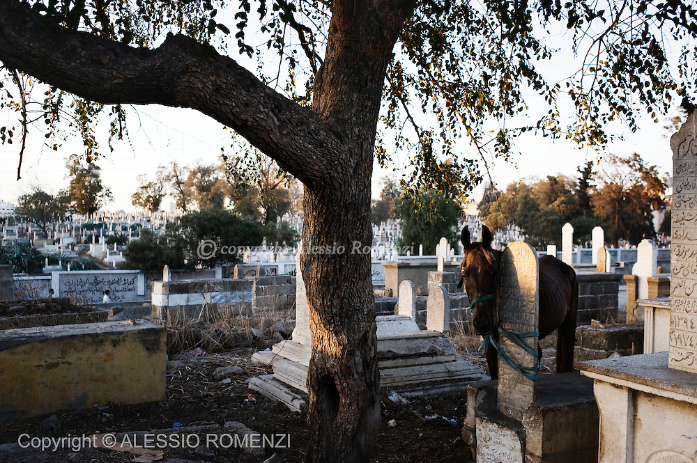 GAZA: This picture shows a horse ties on a grave in a cemetery in Gaza City on September 8, 2010 ahead of the Eid Al-Fitr holiday that marks the end of the fasting month of Ramadan.© ALESSIO ROMENZI