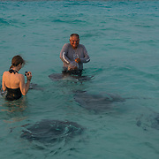 Interacting with Stingrays at Stingray City. Grand Cayman Island.