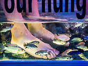 "03 JUNE 2016 - SIEM REAP, CAMBODIA: FIsh nibble on tourists' feet during a ""Fish Massage"" at a street side massage parlor near Pub Street in Siem Reap, Cambodia. Pub Street is the center of Siem Reap's dining and nightlife.     PHOTO BY JACK KURTZ"