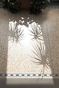 potted house plant shadow on floor