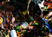 A watch that has stopped at 16:50 lies among other items found in Aokigahara Jukai, better known as the Mt. Fuji suicide forest, which is located at the base of Japan's famed mountain west of Tokyo, Japan.