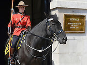 © Licensed to London News Pictures. 23/05/2012. London, UK Constable Jennifer McRae in position on Whitehall. Canadian Mounties Guard Her Majesty the Queen at Horse Guards Parade on Whitehall in Westminster. They will guard on all day and will be the first non-British force to guard the Queen. Photo credit : Stephen Simpson/LNP