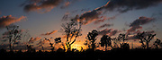 Sunset over the coastal mixed woodland of the Southern Everglades
