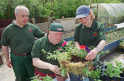 Men with Downs Syndrome at work on community allotment project making plant basket with supervisor,