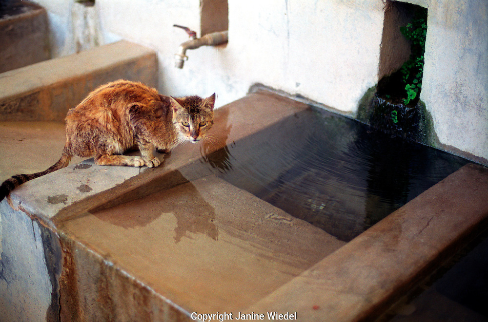 cat drinking from ancient water trough in Ionian Island of Kefalonia.