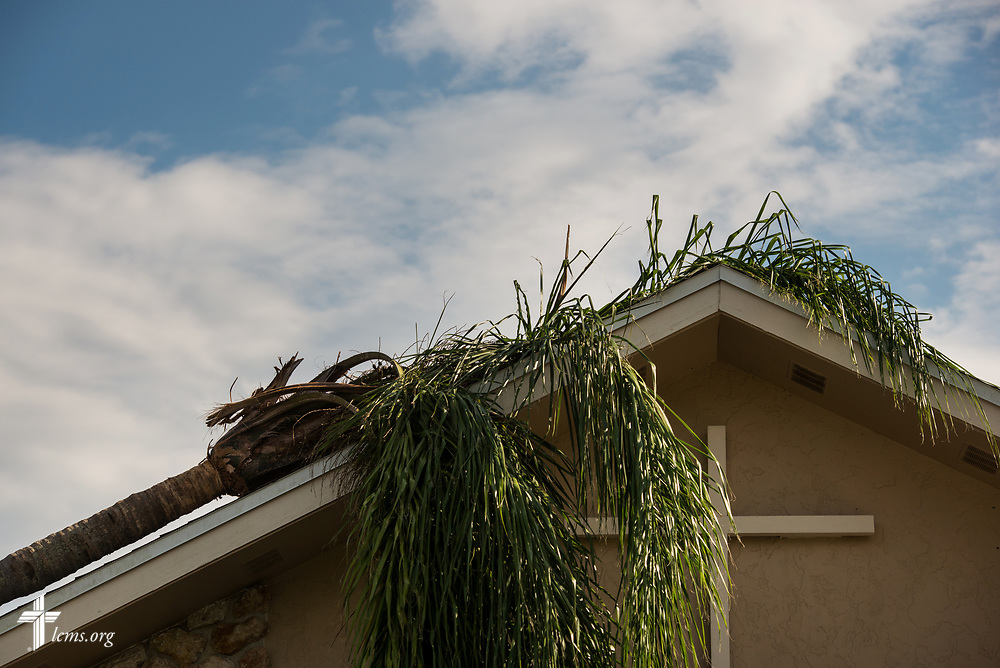 A fallen palm leftover from Hurricane Irma at The Golden Gate Pelican: Community Center and Lutheran Church, Naples, Fla., on Wednesday, Sept. 13, 2017. LCMS Communications/Erik M. Lunsford