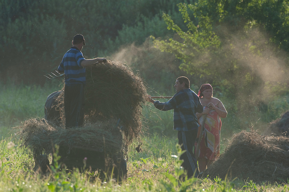 Farmers with traditional horse drawn cart harvesting hay, near Codrii forest , central Moldova