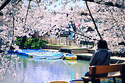 The northern moat of Hirosaki Castle Park in spring time.  Tourists can row the boats along the moat which is adorned with beautiful cherry blossoms. A very relaxing place to be.<br />