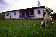 Conceicao do Mato Dentro_MG, Brasil...Detalhe de um cachorro dalmata em Conceicao do Mato Dentro, Minas Gerais...A Dalmatian dog in Conceicao do Mato Dentro, Minas Gerais...Foto: LEO DRUMOND / NITRO