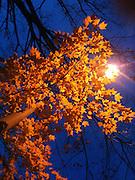 hipstamatic tree under street light