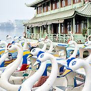 Paddle boats shaped like swans are lined up at the dock of West Lake (Ho Tay) in Hanoi, Vietnam.