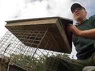 Medewerkers van Wetterskip Fryslan gebruiken met appels gevulde drijvende lokaasvlotjes voor de bestrijding van muskusratten - Muskrat control with floating muskrat traps with apples.